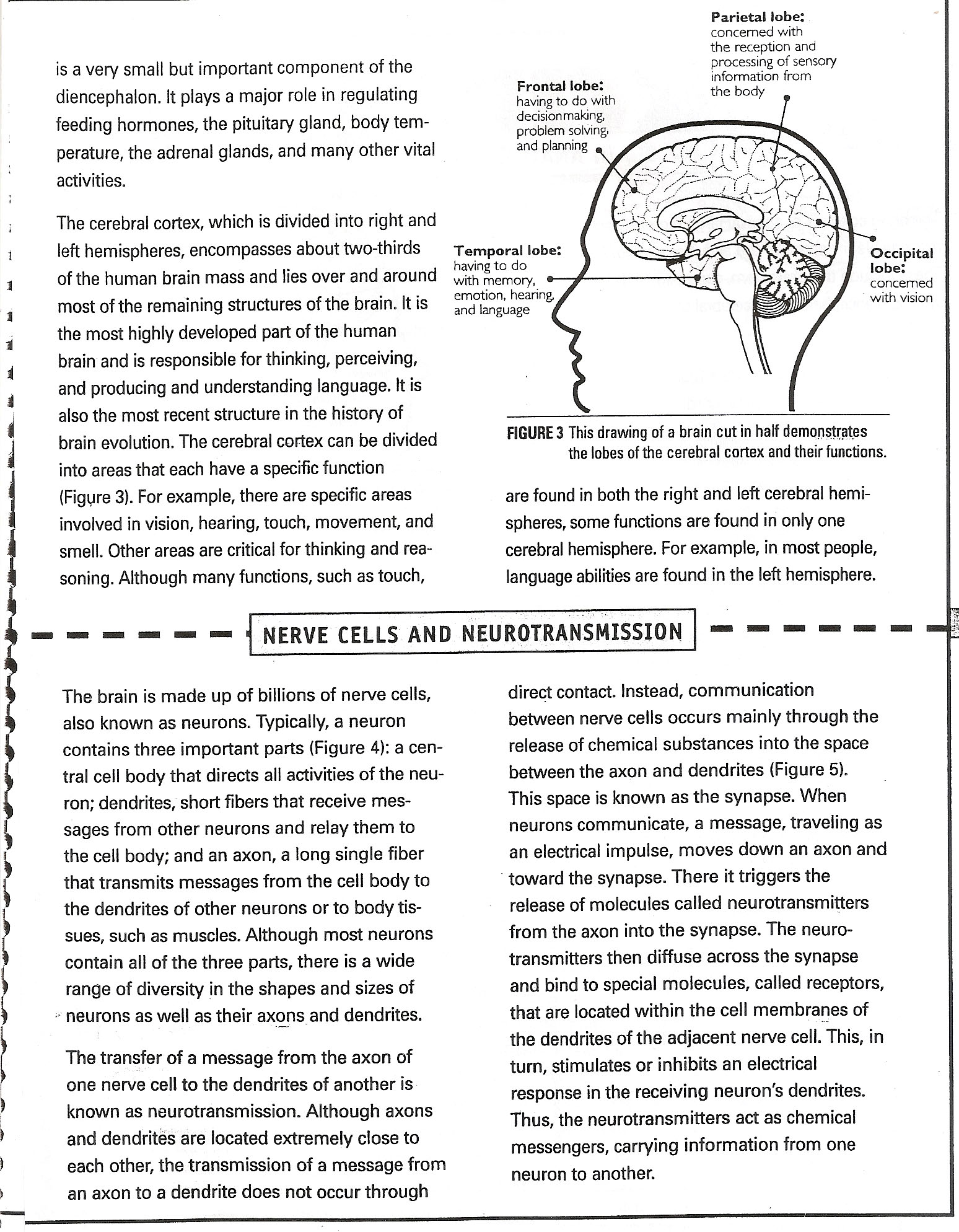 earjmsscience licensed for noncommercial use only Drugs and – Nervous System Worksheet